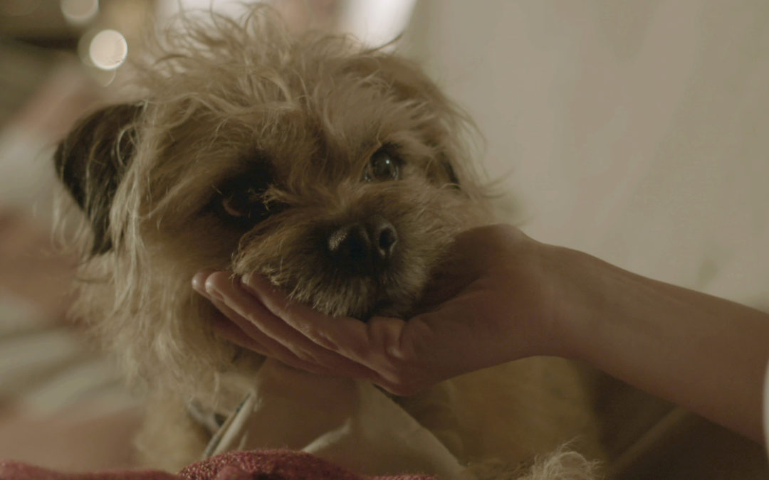 SHORTS and to the Point: Jennifer Sheridan and Matthew Markham's SET ADRIFT is a sad doggie story that will make you cry in 8 minutes flat